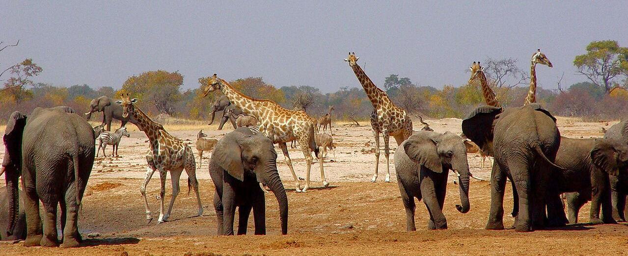 Hwange, Zimbabwe l'Eden sauvage