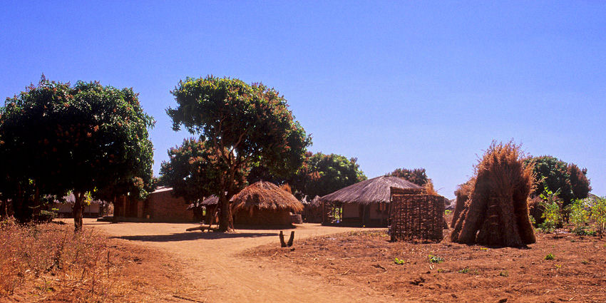 Safari Afrique Zambie Malawi