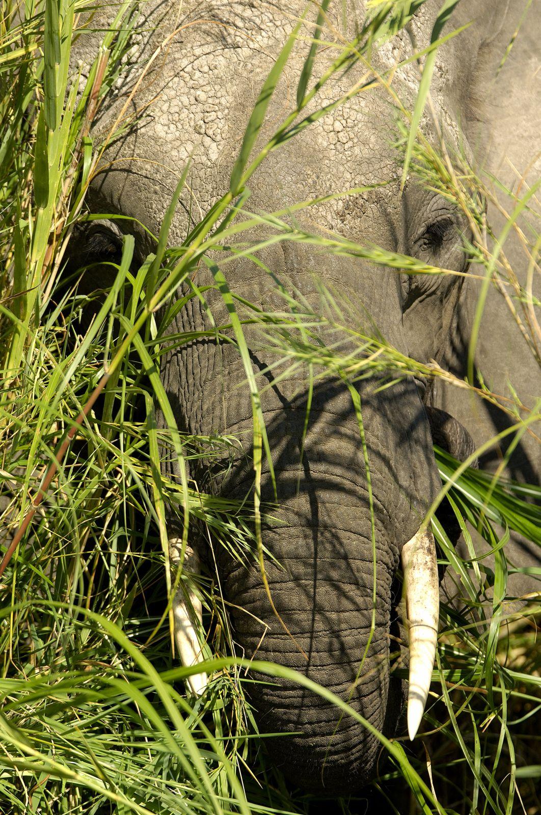 Parc national de Liwonde - Malawi
