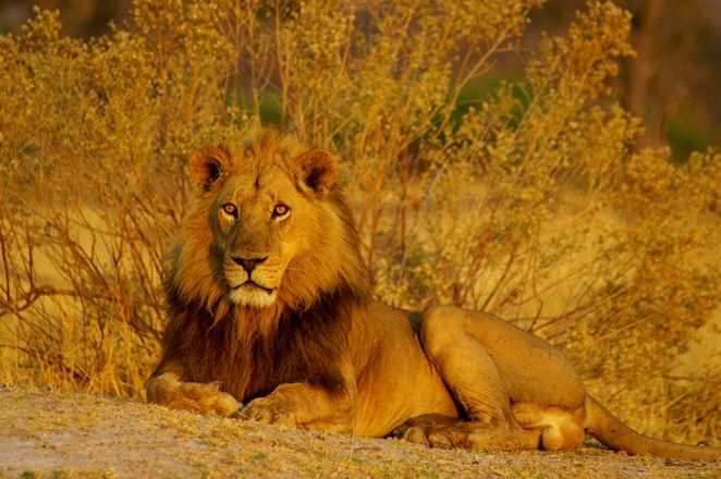 Safari Afrique Nord Tanzanie