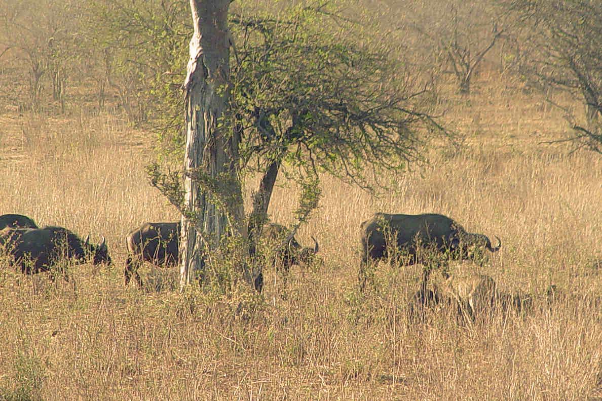 Safari Afrique Sud Tanzanie