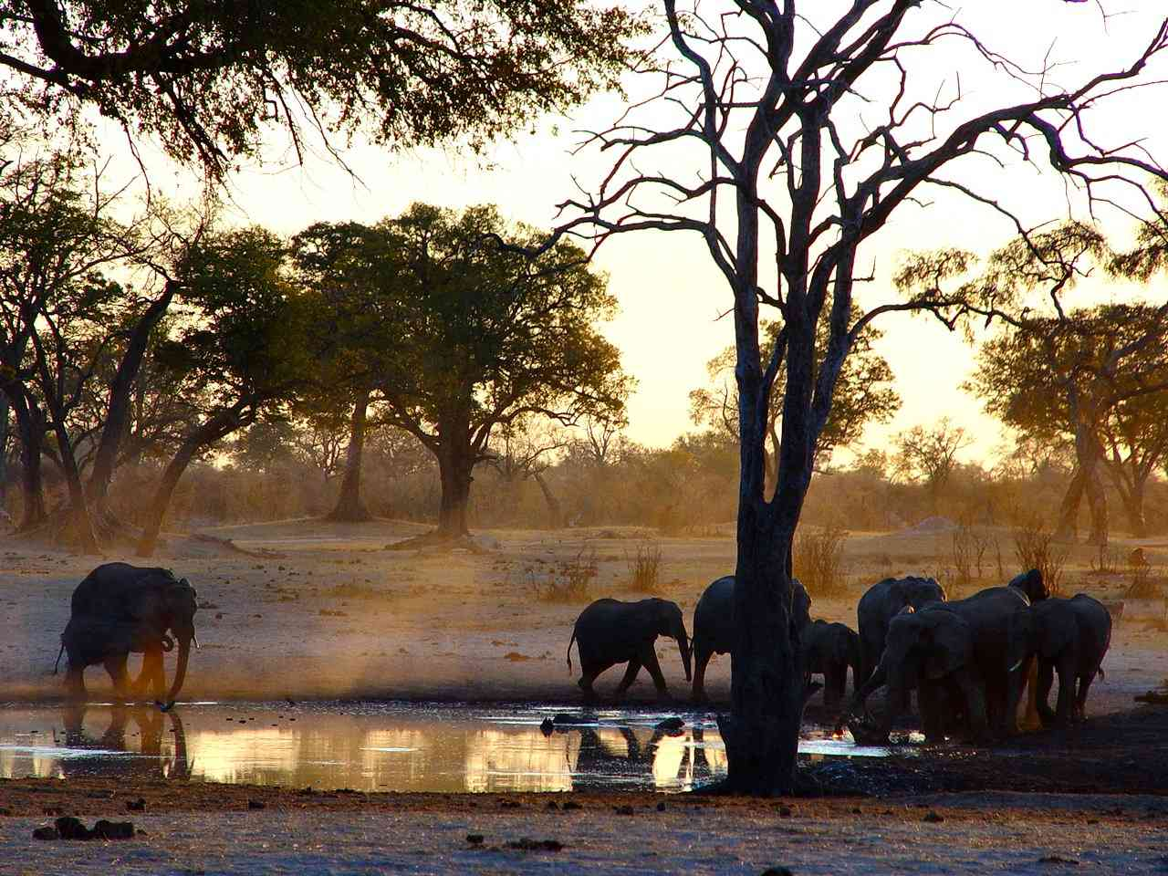 Safari Afrique Hwange